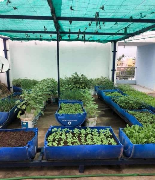 Roof Top Garden Terrace Garden Kitchen Garden Vegetable: Terrace Gardening (Rooftop Gardening) Information