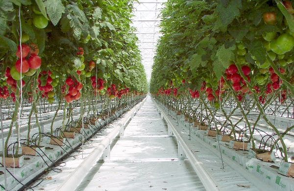 Polyhouse Subsidy, Cost, Profit, Project Report | Agri Farming