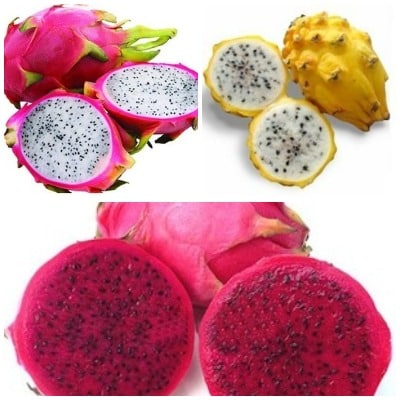 Different Skin Colors of Dragon Fruit.