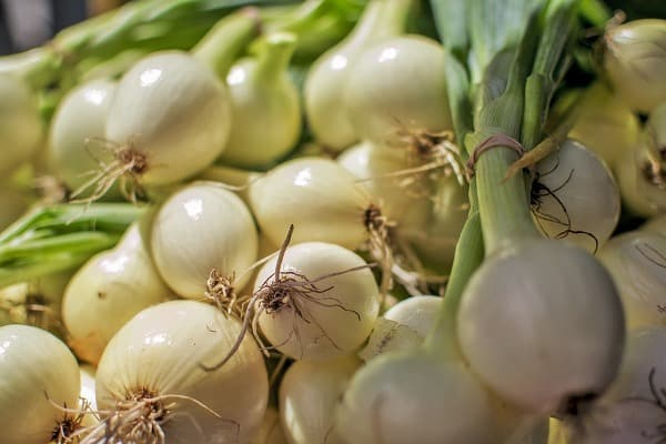 Onion Growing Tips.