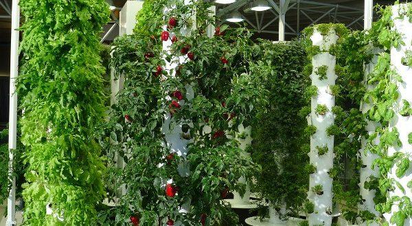 Hydroponic Vertical Gardening. (Pic Source: Flicker).