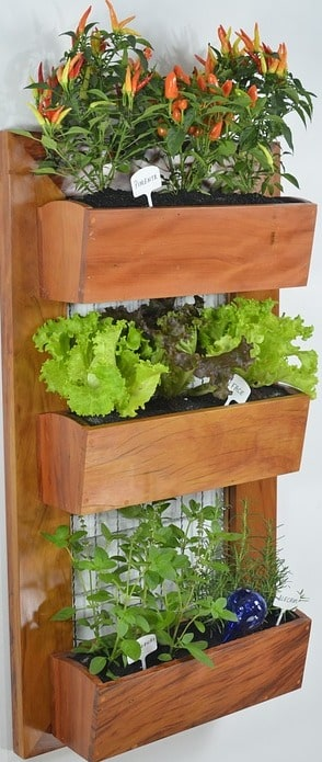 Indoor Vertical Gardening.