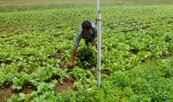 Natural Zero Budget Farming.