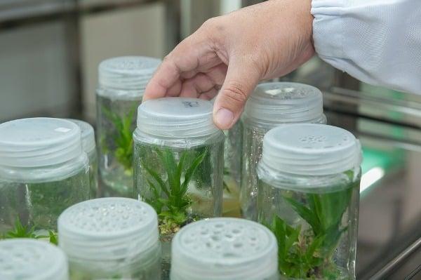 Plant Tissue Culture Facility.