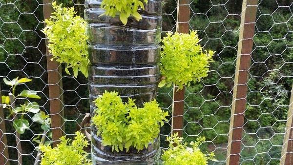 Vertical Gardening Tips.
