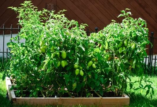 Square Foot Gardening Ideas (Flicker).