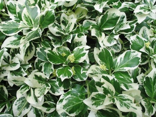 Benefits of Ornamental Plants.