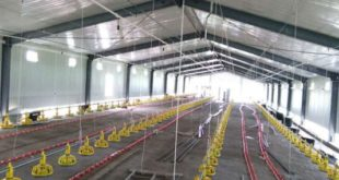 Low Cost Construction Of Poultry Sheds Agri Farming