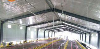 Poultry Farm Shed Design PDF - Agri Farming