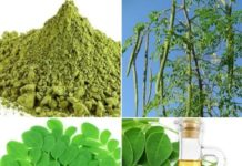 Drumstick Powder and Oil Extraction Process and Methods.