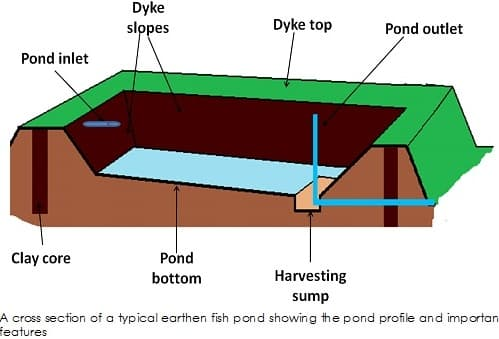 Fish Pond Design (Pic Source Wiring Library).