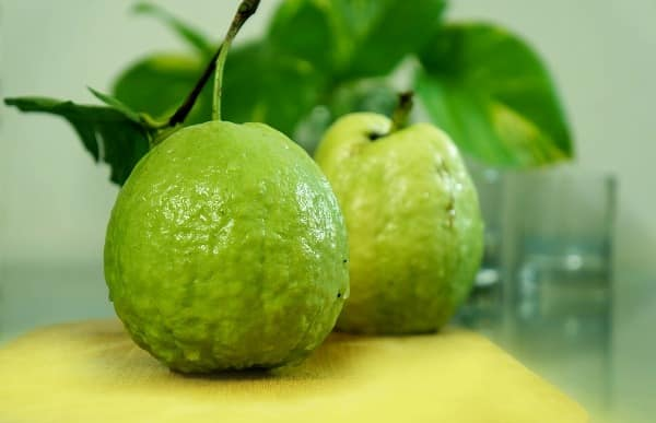 Guavas farming in india