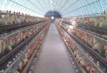 Poultry Questions And Answers.