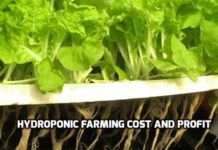 Hydroponic Farming Cost and Profit.