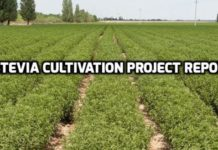 Stevia Cultivation Project Report.