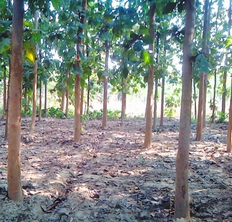 Teak Wood Farming Project Report Cost And Profit Agri Farming