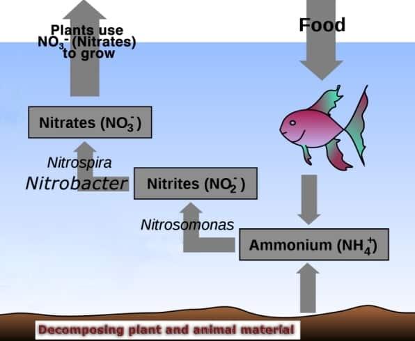 Aquaponics Diagram.