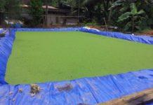 Azolla Farming Project Report.