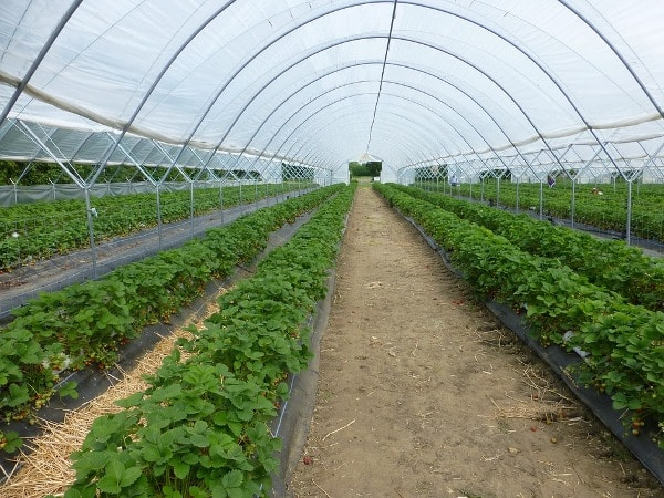 Benefits of Greenhouse Farming.