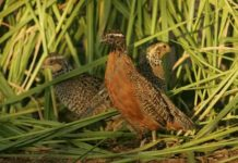 Quail Farming Project Report.