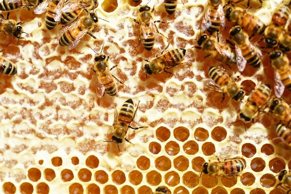 Economics Of Beekeeping.