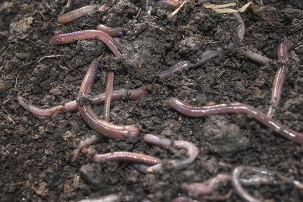 Economics of Organic Fertilizer Production.
