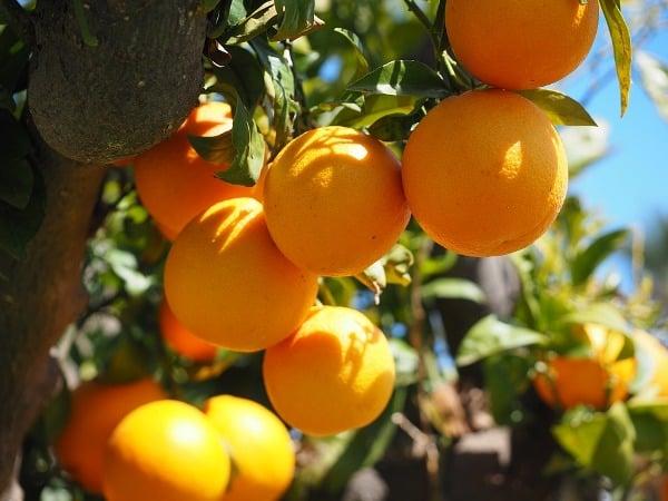 Intercultural Operations of Oranges.