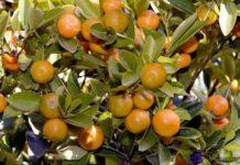 Orange Farming Project Report.