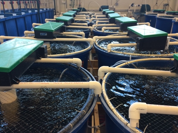 Ras Fish Farming Recirculating Aquaculture System Agri