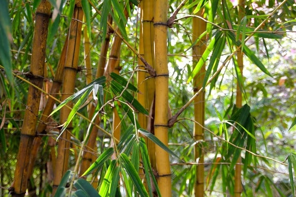 Scope and Importance of Bamboo.