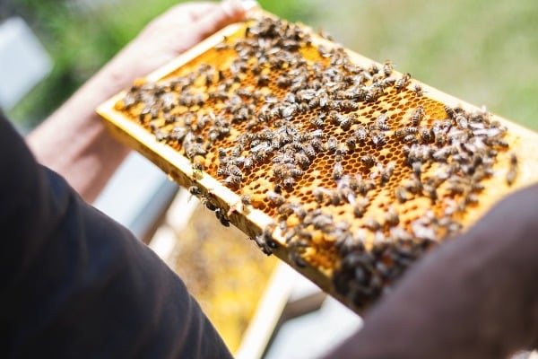 Scope and Importance of Beekeeping.