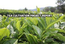Tea Farming Project Report.