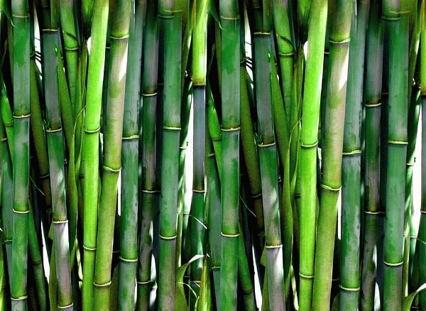 Yield of Bamboo.