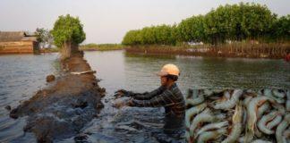 Prawn Farming Project Report, Cost, Profits Guide | Agri Farming