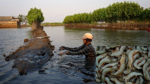 Prawn Farming Project Report, Cost, Profits Guide | Agri Farming