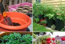 Container Gardening Frequently Asked Questions.