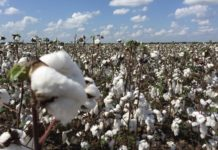 Cotton Cultivation Project Report.