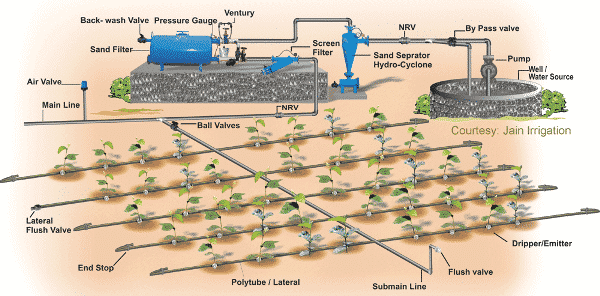 Drip Irrigation System A Complete Guide Agri Farming