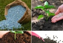 Frequently Asked Questions About Fertilizers.