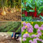 Frequently Asked Questions About Gardening.
