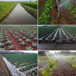 Frequently Asked Questions About Irrigation.