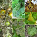 Frequently Asked Questions About Plant Diseases.