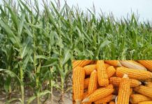 Maize Farming Project Report.