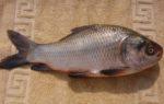 Catla Fish Farming Project Report.