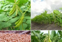 Soyabean Cultivation Project Report.
