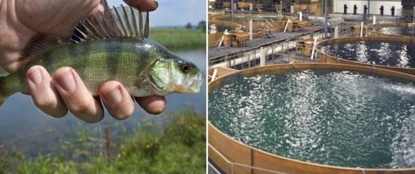 Indoor Aquaculture, Fish Farming Methods | Agri Farming