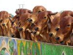 Dairy Farming In Karnataka.