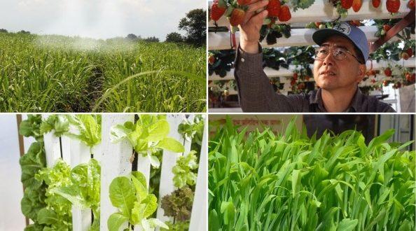 modern farming techniques in india