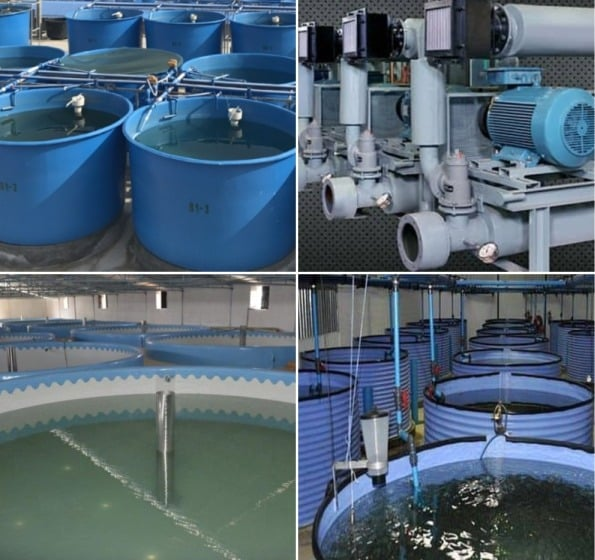 RAS Fish Farming Equipment, Cost, Training, Courses | Agri