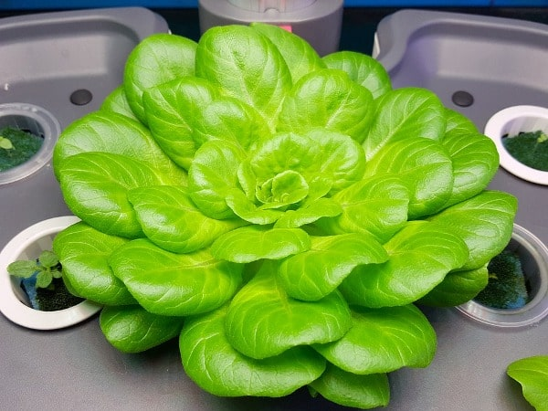 Manures Required for Hydroponics.